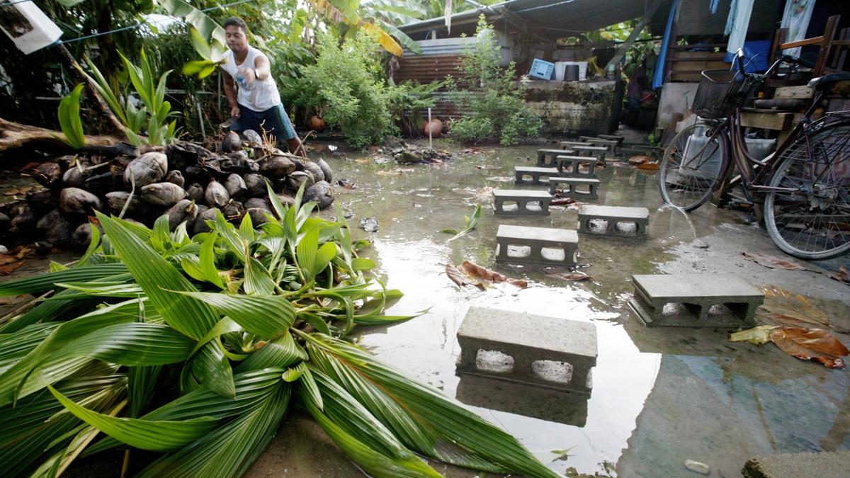 Un habitante de la isla de Tuvalu recoge cocos