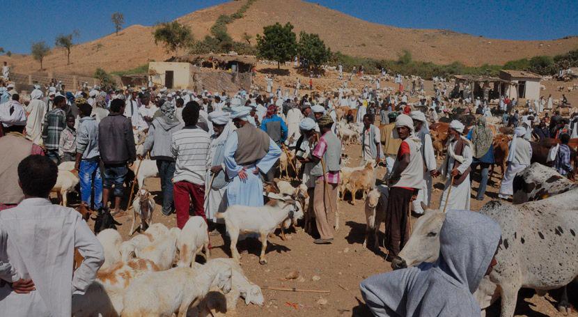 los somalíes dejan sus hogares para buscar agua y comida