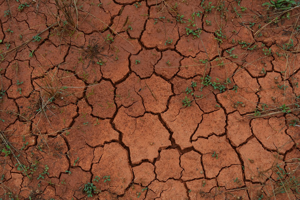 La Sequía Está Dejando Sin Cultivos Las Tierras