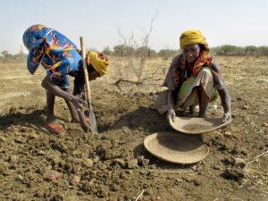 mujeres excavando en tierras secas