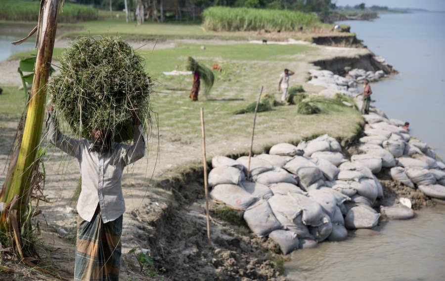 Sirajganj es una comunidad en Bangladesh donde muchas personas fueron desplazadas varias veces debido a la erosión de los ríos.. © IOM 2016/Amanda NERO